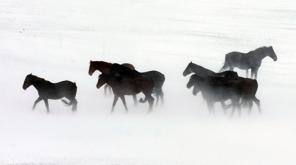 pferde im schnee_Foto Joachim Baier