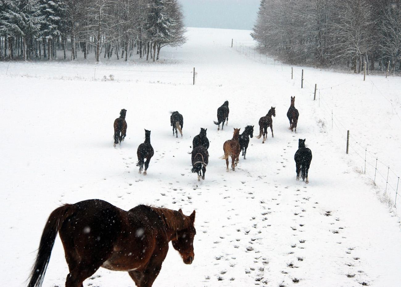 1. Home_Austrieb_Winter_1300x930_002