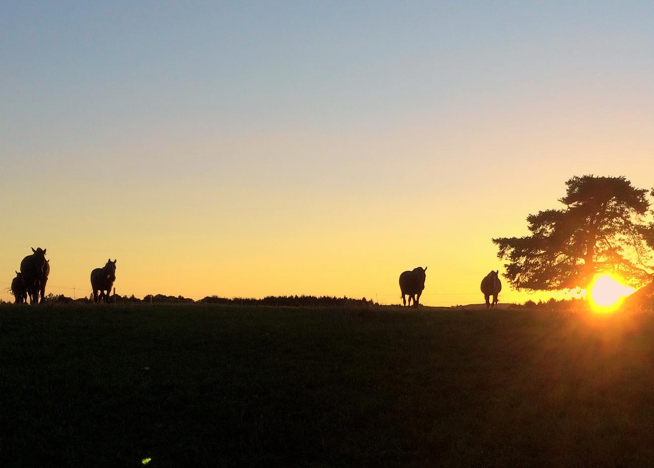 1.Home_Sonnenuntergang-Haidhof_Herbst