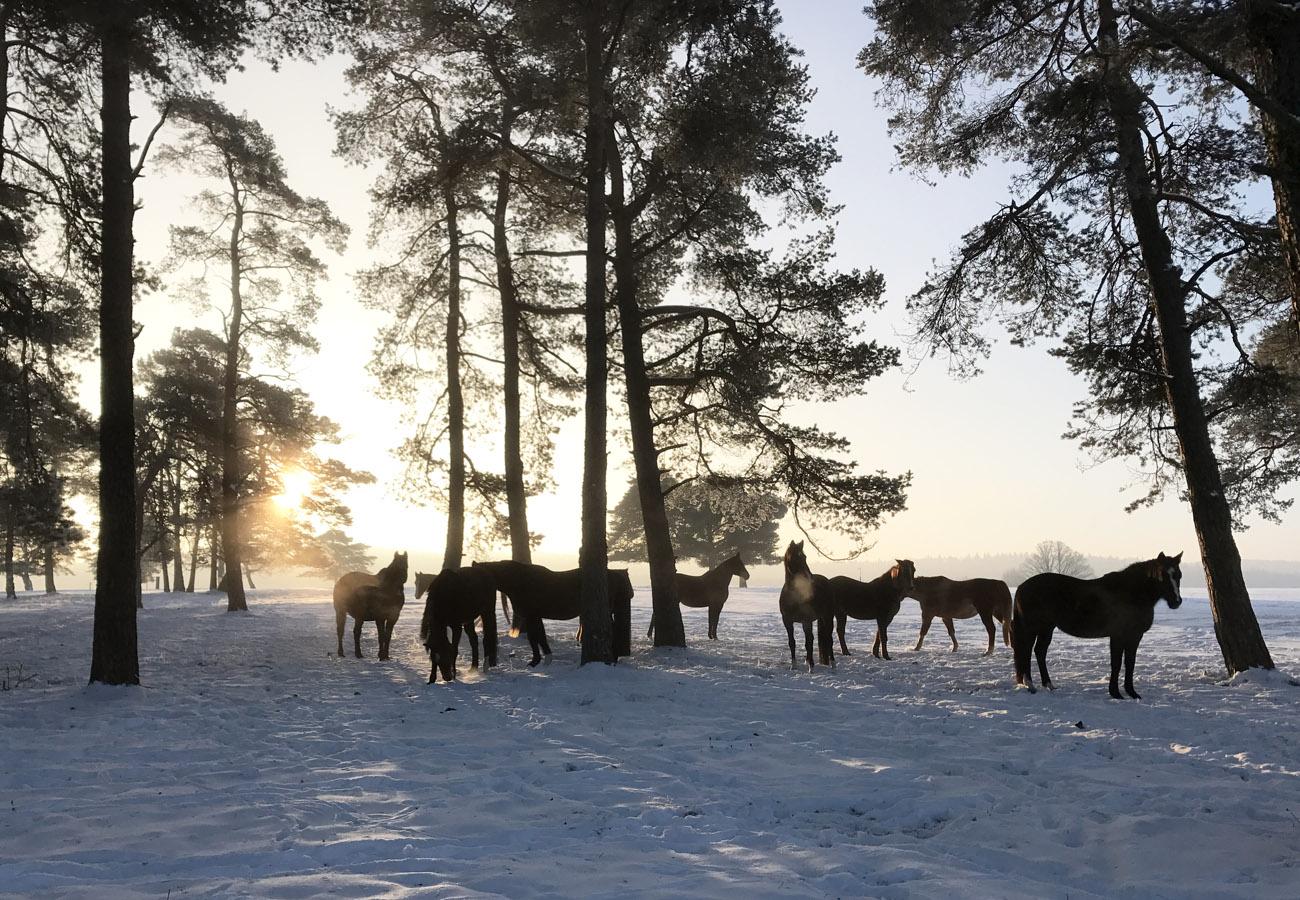 1.home-winter-sonnenaufgang
