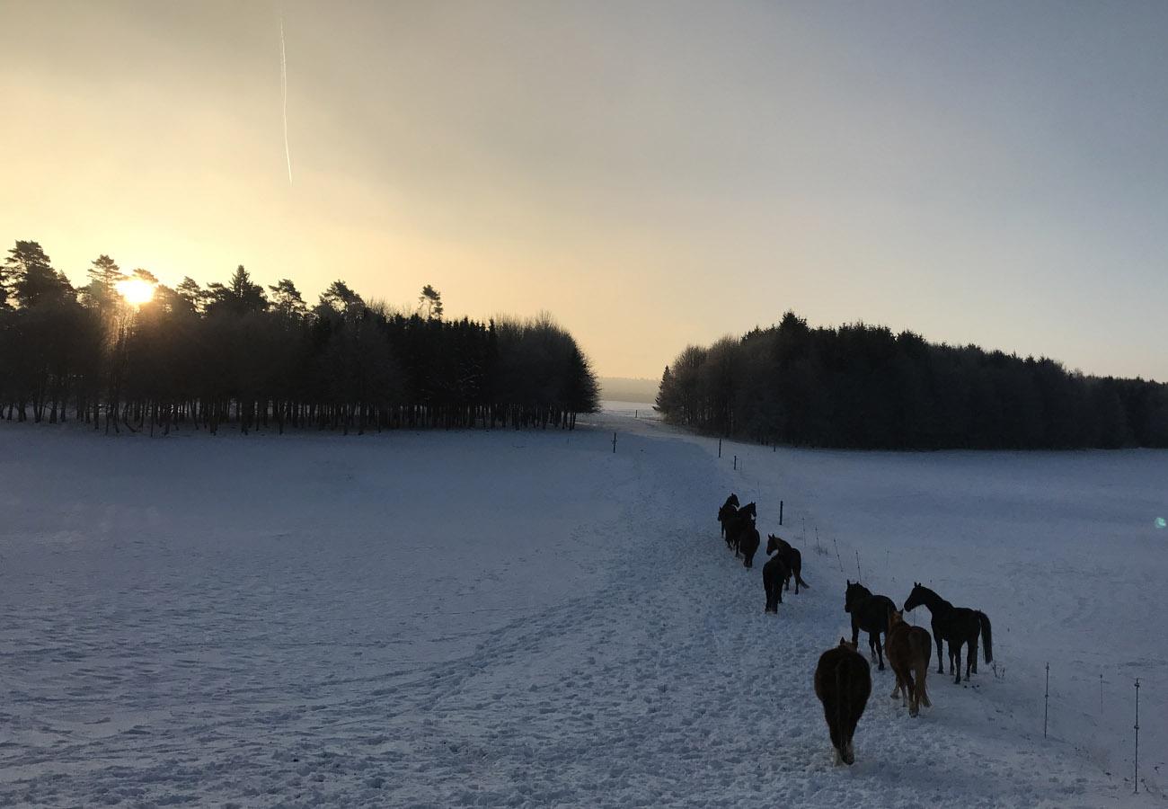 1.home-winter_weideaustrieb