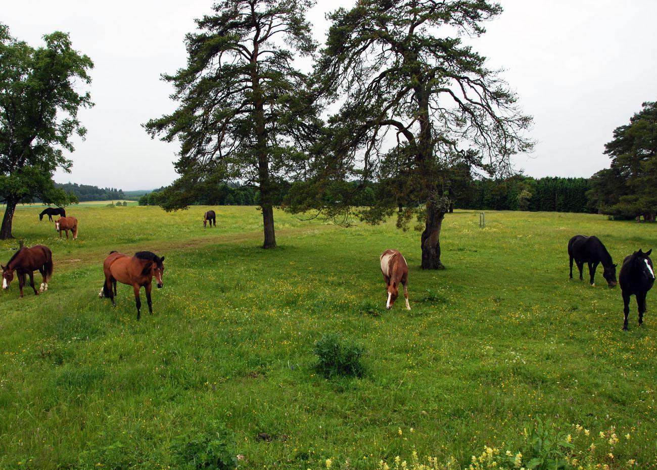 1.home_Juni-finstere-birken