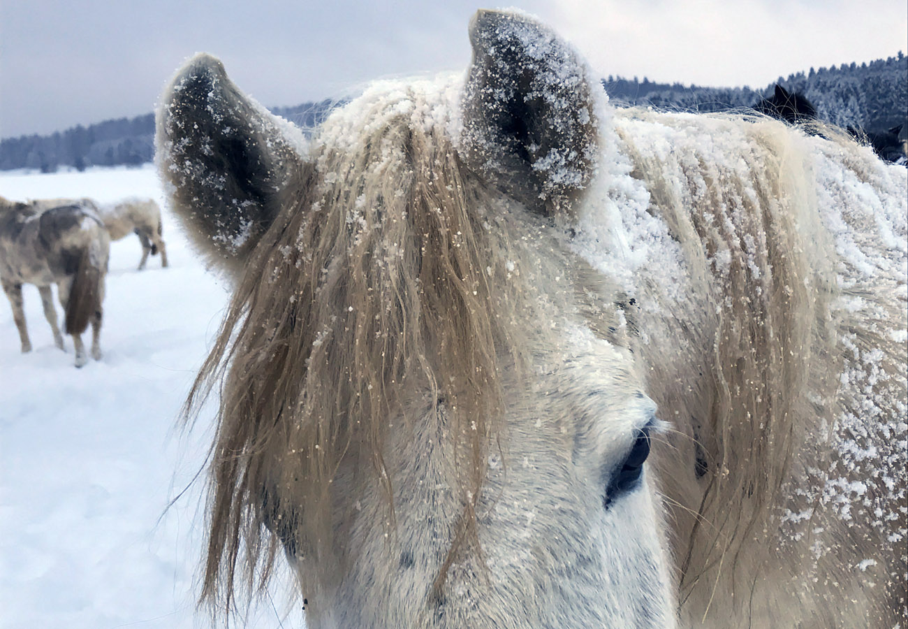 1.home_Winter_Neuschnee_Bonito_1300x900