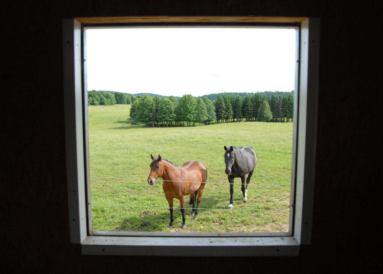 3. Pferdepension_1300x930_Blick aus dem Fenster
